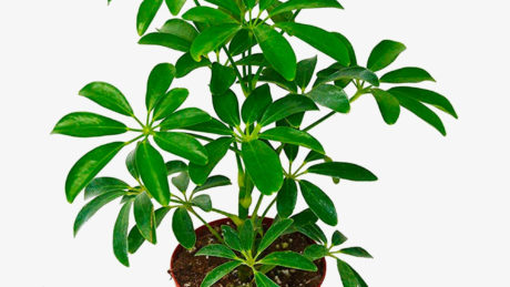 The 15 Best Indoor Plants for Every Kind of Person