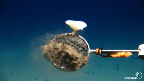 It Could Take Decades for the Ocean Floor to Recover From Deep Sea Mining