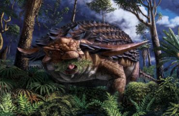 Fossilized dinosaur stomach reveals dino's 110-million-year-old last meal