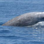 Record-Breaking Whale Stays Underwater for Mind-Bending 3 Hours and 42 Minutes